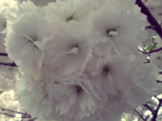 étonnant floraison