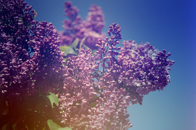 blur-dreamy-texture-texturepalace-29
