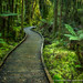 New Zealand Forest by David Swindler (ActionPhotoTours.com)