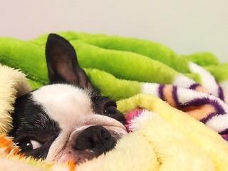 犬 冷え症