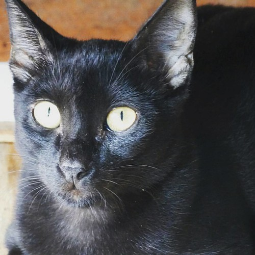 #Cat #Olhos #Pet #Gato #FotoMinha #MeuAmazonas #Nature #CoisasqueVejo #BoaNoite