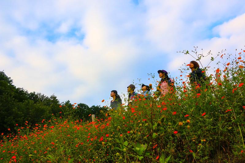 2014-09-23_00450_巾着田.jpg