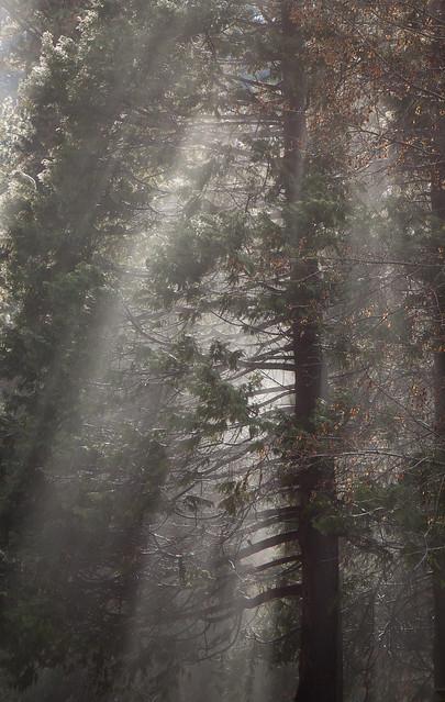 Trees, Sunlight, Mist