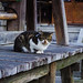 Today's Cat@2016-02-05 by masatsu