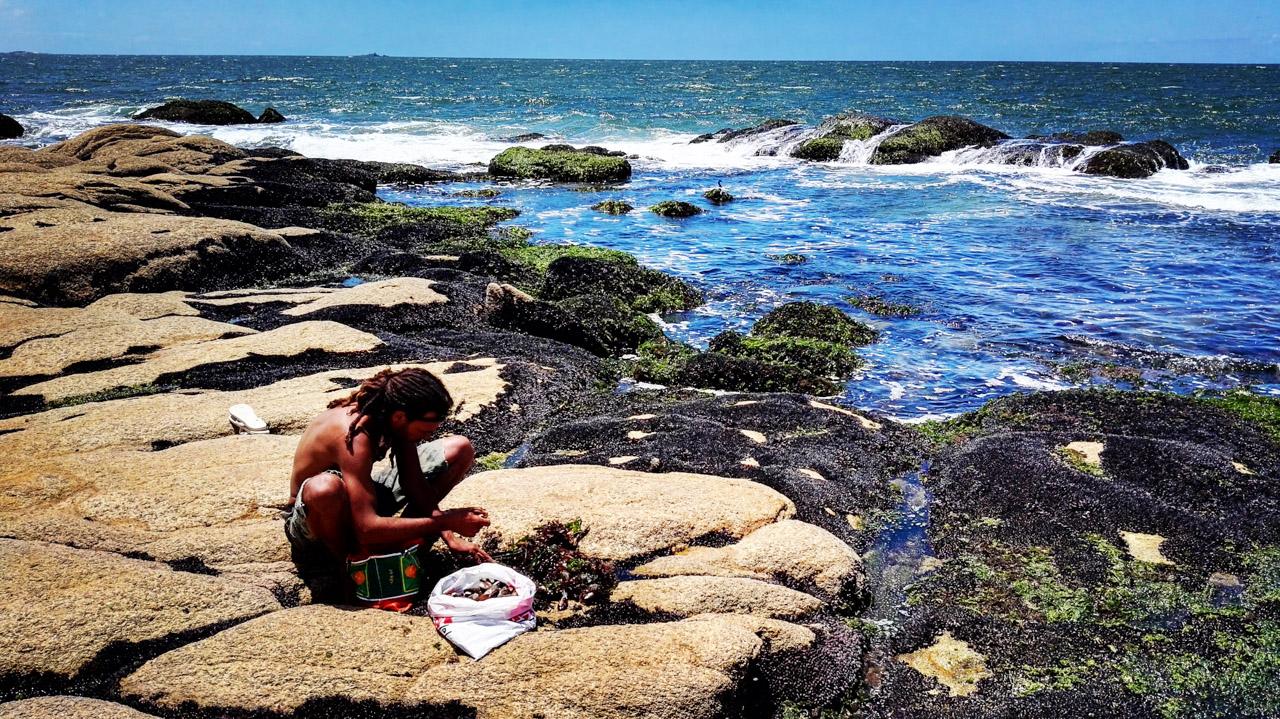 Un habitante del poblado de Cabo Polonio trabaja para ganarse la vida, recolectando y limpiando los mejillones que se adhieren y crecen en las rocas de la orilla del mar. (Fotografía tomada con un smartphone Huawei P8, Elton Núñez)