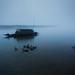 Misty morning by mostakim timur
