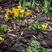2016_04_01 plantations avec crottes et mégots