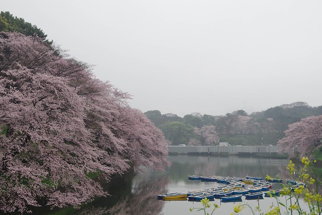 2016/04/03千鳥ヶ淵-8