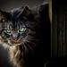 Midnight by Tom Landretti