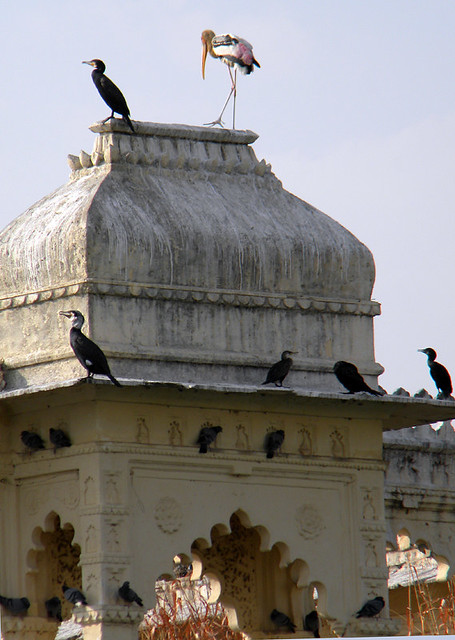 A 'Bird House' in Udaipur, India