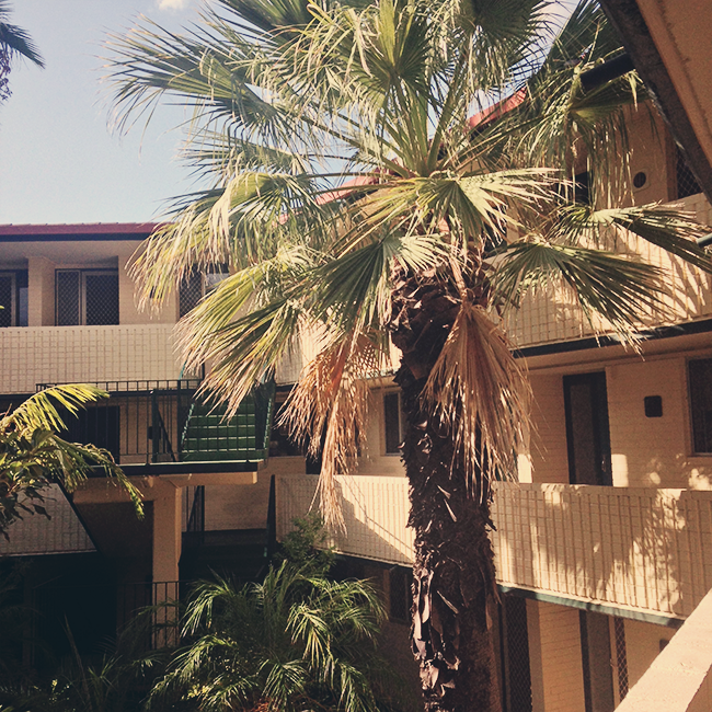 palmsblogi