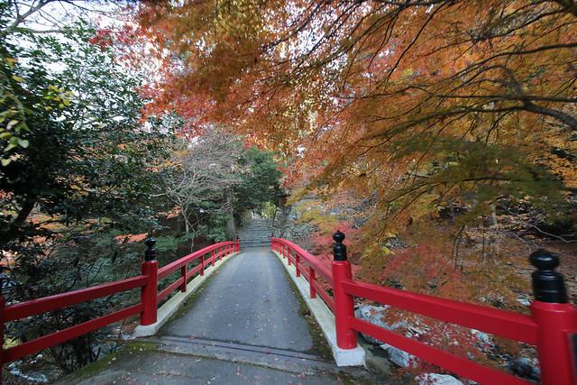 20141122-武奈ヶ岳&京都ライトアップ-0076.jpg