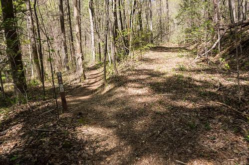 Palmetto Trail -  Jocasee Gorges - 6