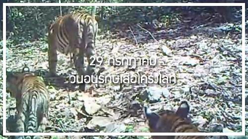 วันอนุรักษ์เสือโคร่ง