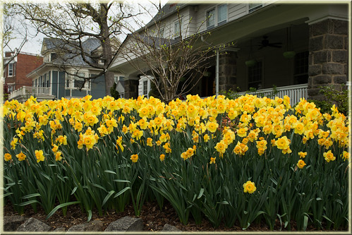 Springtime in the 'hood
