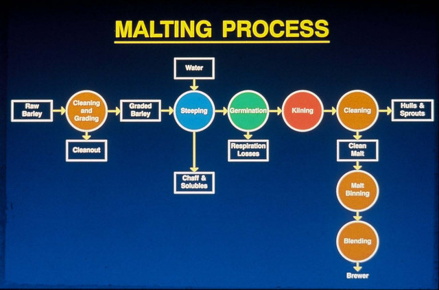 malting-process