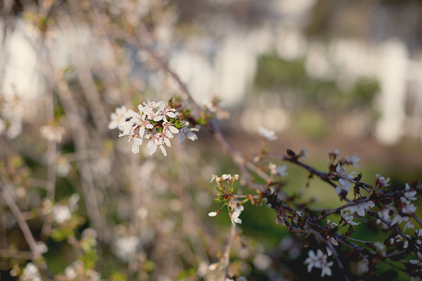 spring yard 2