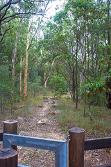 Start of the path to the summit of Mount Beerwah