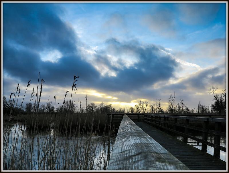 Oostvaardersplassen Lelystad (23-01-2016).