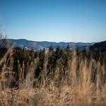 Ovedenski Photography