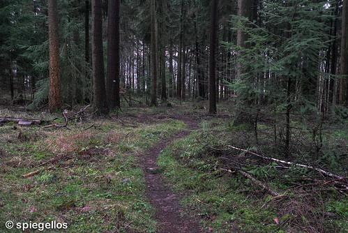 Trailrun-37