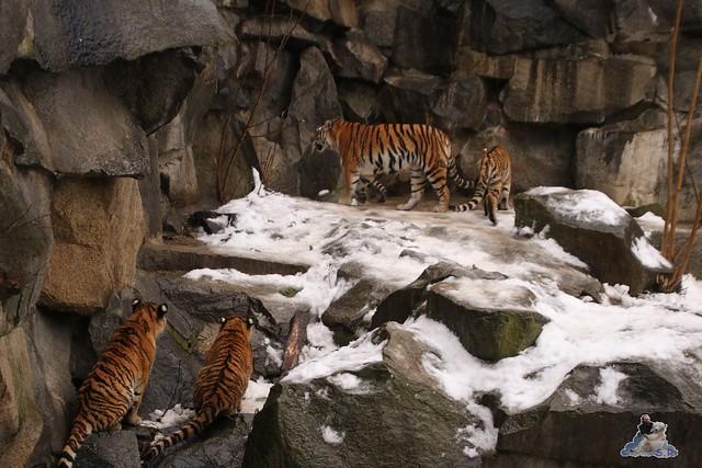 Tierpark Berlin 10.01.2016   0206