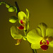 Perspectives on an orchid