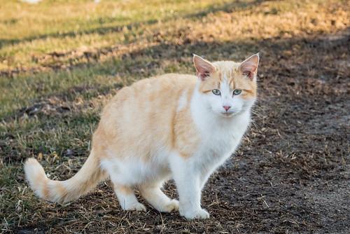 Farm cat: amazing eyes