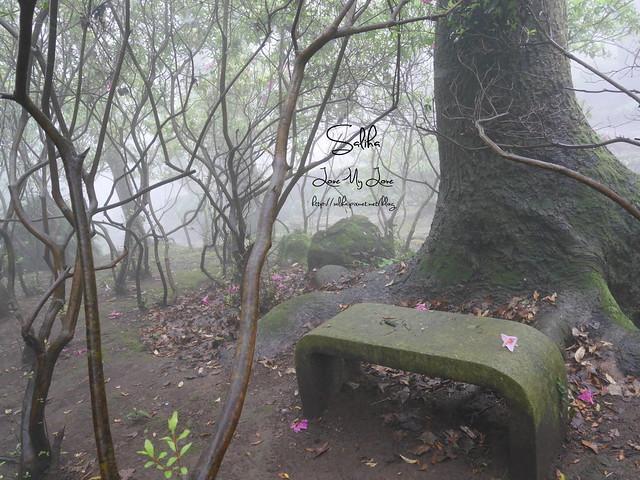 台北一日遊景點陽明山花季賞櫻花 (7)