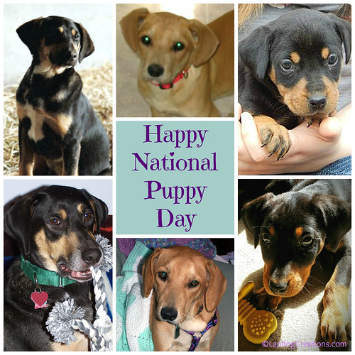 Happy #NationalPuppyDay from the #LapdogCreations crew! #puppies #rescueddogs #adoptdontshop #puppylove ©LapdogCreations