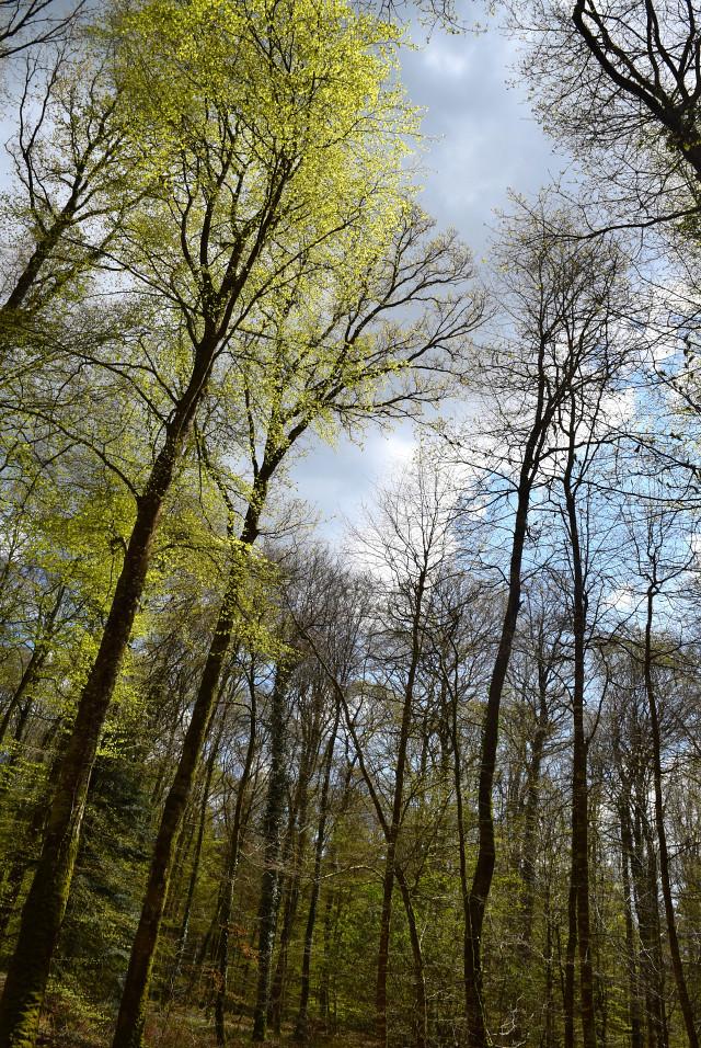 Walking in the forest, Brittany | www.rachelphipps.com @rachelphipps