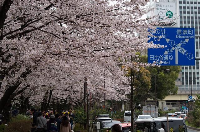 2016年4月2日お花見-28