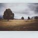 gettysburg_wheatfield by Judy M. Boyle