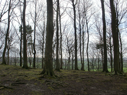 Sharpenhoe beech trees and view