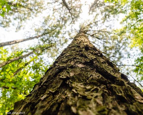 nature unitedstates southcarolina depthofview
