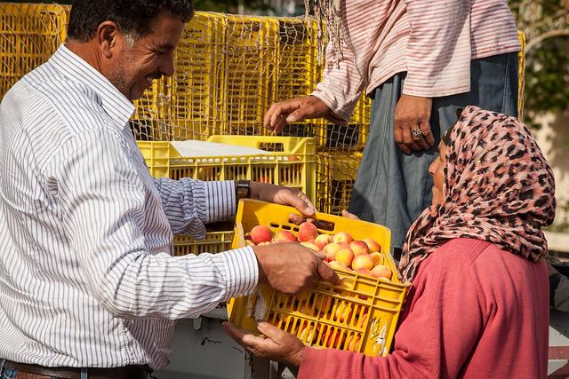 La vente directe de l'abricotier