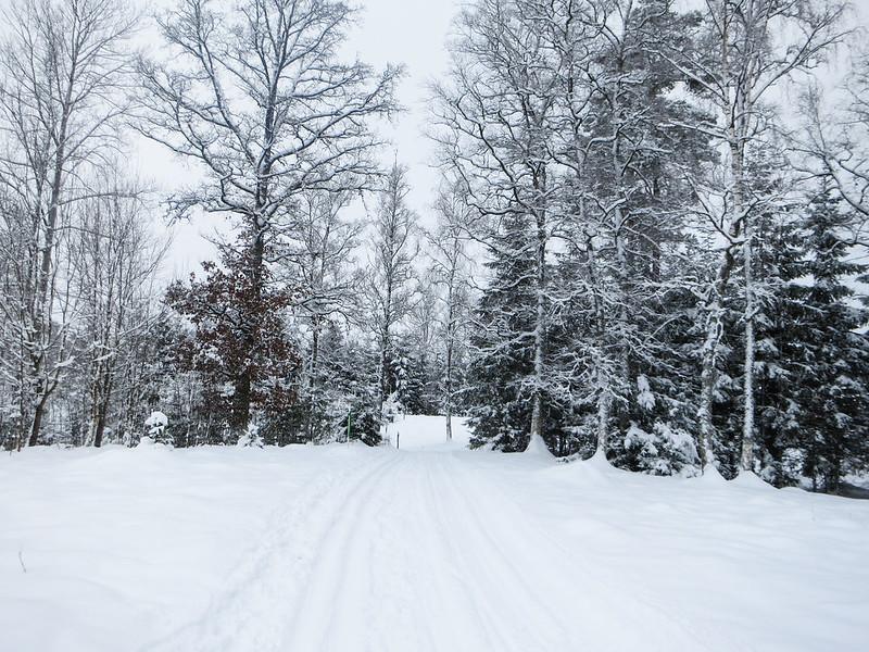 hallby skidor-6