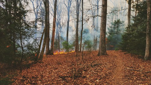 trees mountains nature leaves forest fire photography woods path smoke samsung trail burn mtb forestfire photooftheday swatarastatepark flickrsbest capturedmoment mtbtrail samsungs6 saltydogphoto