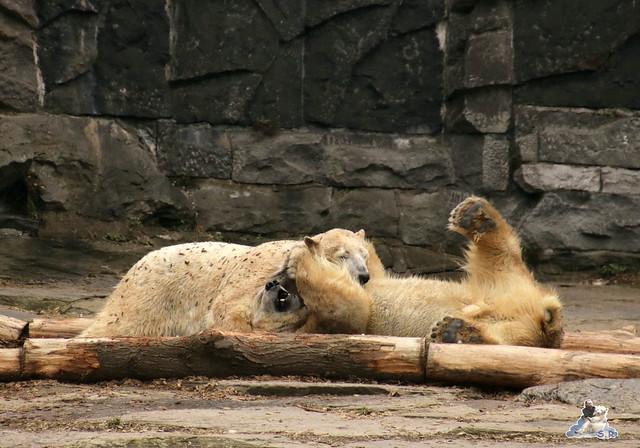 Tierpark Berlin 13.03.2016  046