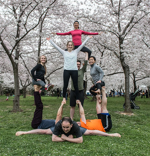 March 26, 2015 Cherry Blossom Festival