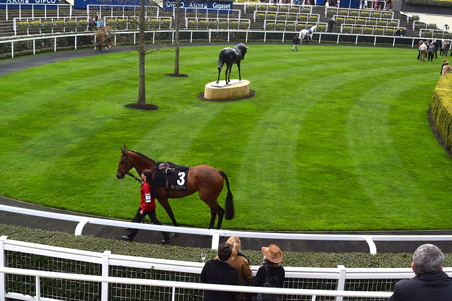 Viewing Racehorses at Ascot | www.rachelphipps.com @rachelphipps