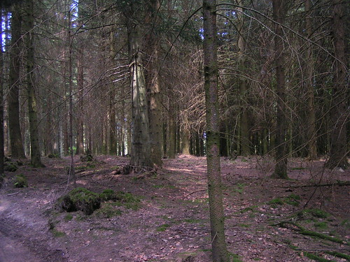 20080511 20497 0901 Jakobus Wald