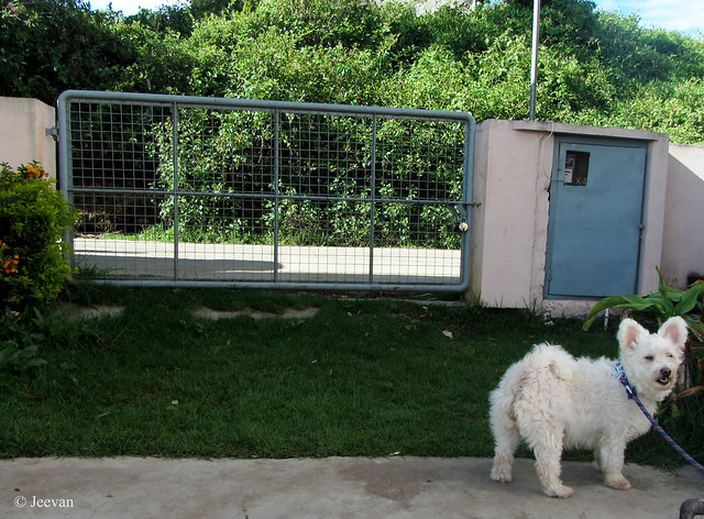 Gate and Pet