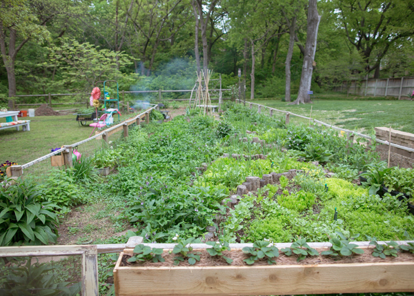 Spring Backyard Garden  Workshop