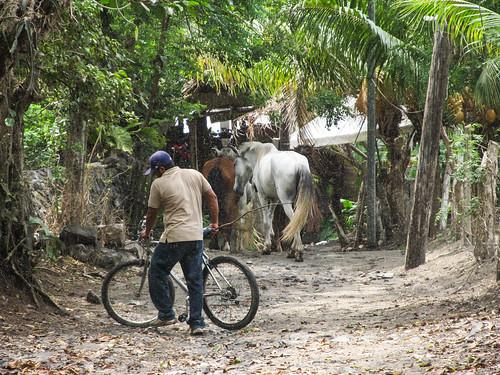 Santo Domingo, ses chevaux et ses millions de mouchettes