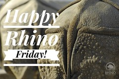 The end of the week is here - Happy Rhino Friday everyone! #TeamRhino