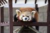 Photo:20160109 Hamamatsu Zoological Gardens 4 By BONGURI