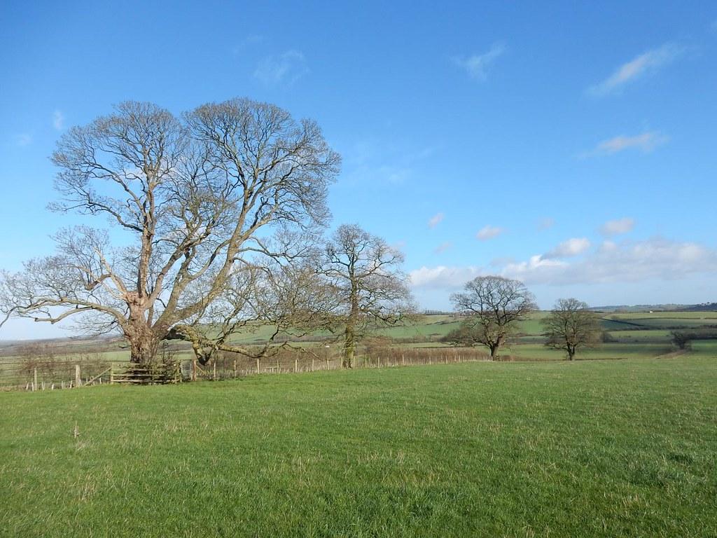 4 prominent trees Haddenham Circular (short)