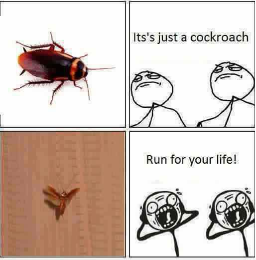 Its just a cockroach