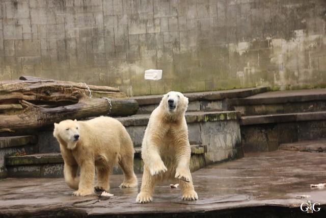 Besuch Zoo Rostock 12.03.201653
